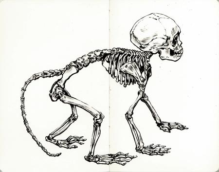 anna-lubinski-illustration-carnet-de-croquis-museum-singe-macaque-buffon-macaca-fascicularis