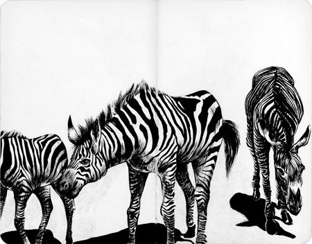 anna-lubinski-illustration-carnet-de-croquis-museum-zebres-zebra
